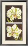 Surabaya Orchids Art by Judy Shelby