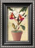 Potted Cattleya Prints by Walter Robertson