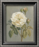 Heirloom White Rose Poster by Danhui Nai