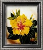 Yellow Hibiscus Print by Ted Mundorff