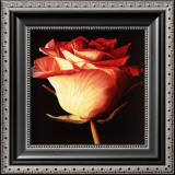 Rose I Poster by Linda Mcvay
