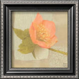 Hellebore I Prints by Philippe Paput