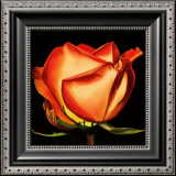 Rose II Prints by Linda Mcvay