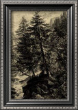 Larch Tree Prints by Ernst Heyn