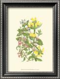 Summer Garden XI Print by Anne Pratt