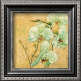 Splendido Orchidea Print by Matina Theodosiou