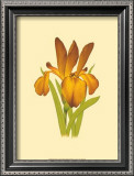 Iris Bloom II Prints by M. Prajapati