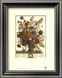 Twelve Months of Flowers, 1730, November Posters by Robert Furber