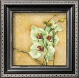 Grazioso Orchidea Prints by Matina Theodosiou