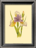 Iris Bloom VII Prints by M. Prajapati