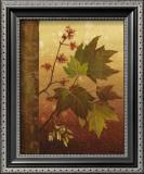 Maple Leaves Prints by Jillian Jeffrey