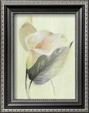 Calla Lily III Prints by Paul Hargittai