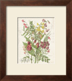 April Sweet Pea Prints by Katie Pertiet
