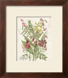 April Sweet Pea Prints by Katie Pertiet