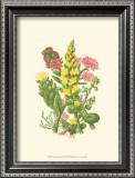 Summer Garden X Prints by Anne Pratt