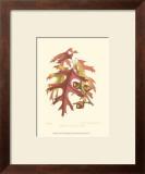 Scarlet Oak Prints by  Sprague