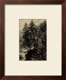 Larch Tree Posters by Ernst Heyn