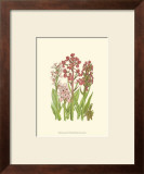 Summer Garden VII Prints by Anne Pratt