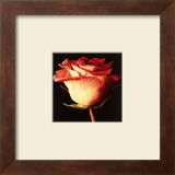 Rose I Prints by Linda Mcvay