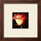 Rose I Prints by Linda Mcvay