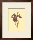 Iris Bloom III Prints by M. Prajapati