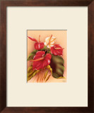 Red and White Anthuriums Art by Frank Oda