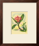Plumeria Prints by Ted Mundorff