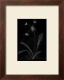 Dandelion Garden I Posters by Alicia Ludwig