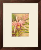 Pink Cattleya Prints by Hale Pua Studio