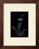 Dandelion Garden II Prints by Alicia Ludwig