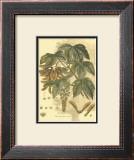 Antique Sycamore Tree Posters by  John Miller (Johann Sebastien Mueller)
