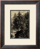Larch Tree Prints by Ernst Heyn