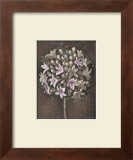 Luminous Agapanthus Prints by Mandy Boursicot