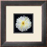 White Dahlia Art by Linda Mcvay