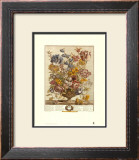 Twelve Months of Flowers, 1730, April Posters by Robert Furber
