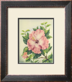 Pink Hibiscus Prints by Ted Mundorff