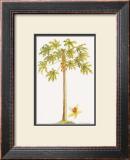 Papaya Tree Posters by Georg Dionysius Ehret