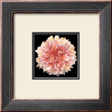 Orange Dahlia Posters by Linda Mcvay