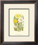 Summer Garden I Print by Anne Pratt