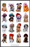 Puppies with Hats Posters by Keith Kimberlin