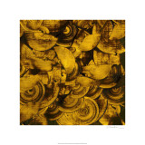 Nautilus in Gold II Limited Edition by Sharon Gordon
