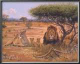 Lion Familly Art by Clive Kay