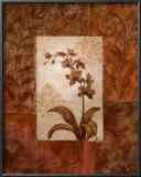 Orchids in Sepia II Art by  Nan