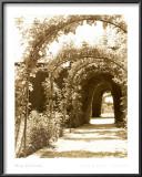 Granada Arbor Prints by Meg Mccomb