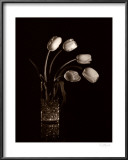 Dramatic Tulips Print by Dick &amp; Diane Stefanich