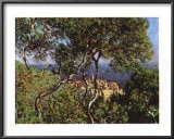 Landscape at Bordighera Posters by Claude Monet