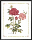 Red Roses Prints by Cappello