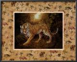 Safari, Tiger Prints by T. C. Chiu