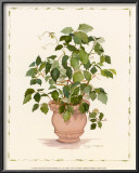 Ivy in a Clay Pot Prints by Cappello