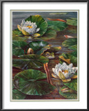 Frog in Lily Pond Prints by  Durgin